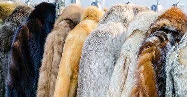 Blogerka Kája - Drahý kožich není nic jiného než zvířecí utrpení