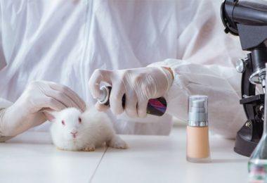 Blogerka Kája - Utrpení v laboratoři, je opravdu nutné?