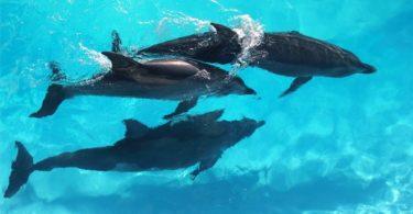 Nehumánní lov delfínů a jejich život v delfináriích