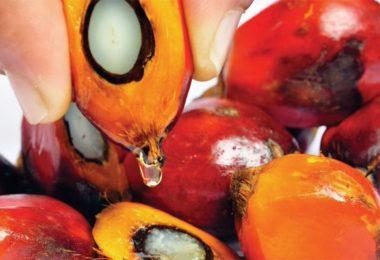 O palmovém oleji a jeho nevýhodách