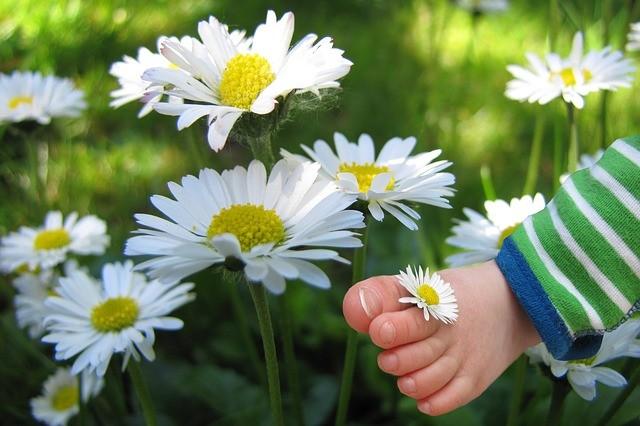 vše o alergii na pyl